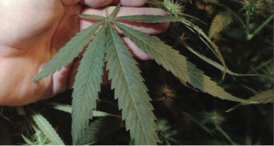 IL legalizes marijuana Jan. 1 but Glencoe pushes back